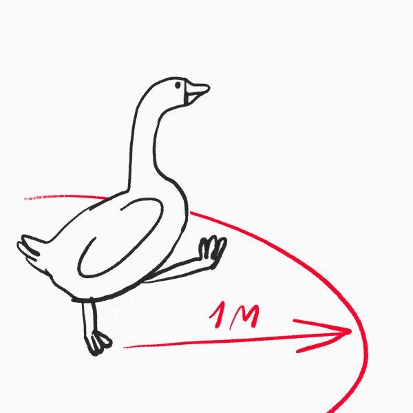 О пользе гусей